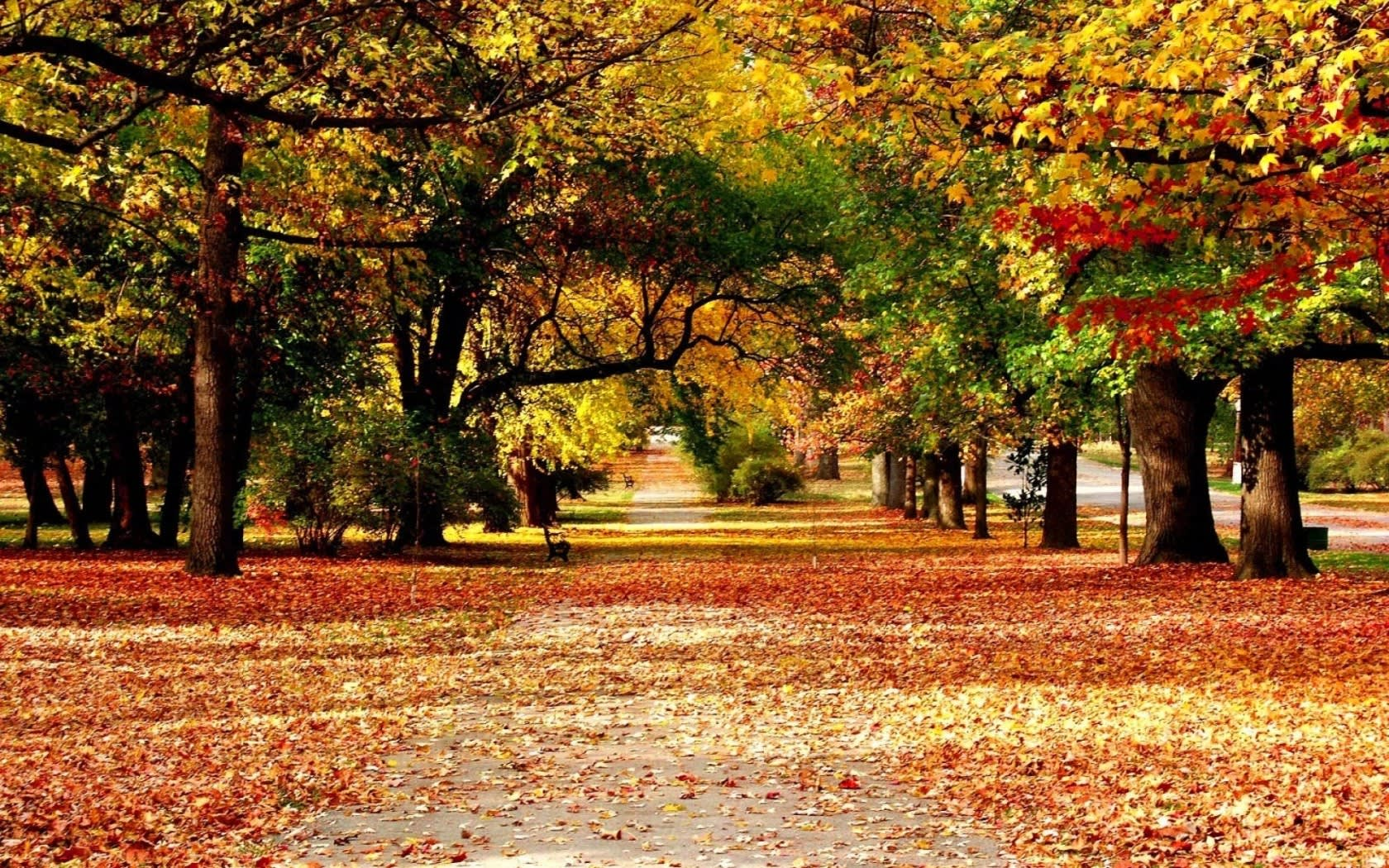 Herbstpauschale