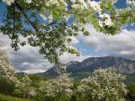 Frühling am Bauernhof