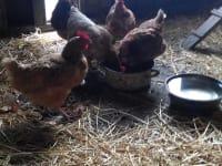 Eier von unseren glücklichen Hühner