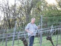 bei der Weingartenarbeit