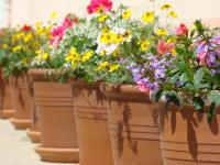 Omas Blumenparadies