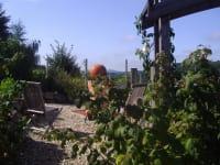 Blick in den Kräutergarten