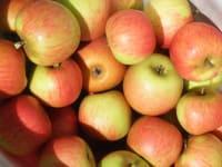 Äpfel soweit das Auge reicht