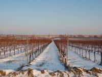 Winter im Burgenland