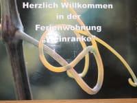 Bild Weinranke