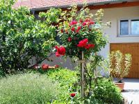 Garten v. d. Haus