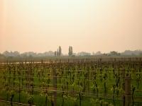 einer unserer Weingärten
