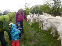 Ausflug bei den weißen Eseln