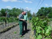 Weingartenarbeit