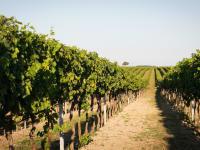 unsere Weingärten