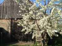 Stadl im Frühling