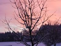 Morgenrot am Malehof