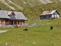 die Jaukenalm - Sommerresidenz unserer Kühe