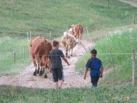 Kinder beim Viehtreiben