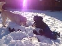 Tollen im Schnee