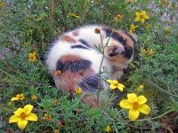Kätzchen Berta