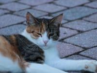 Katze Lilly