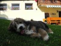 unser Junghund