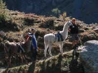 Mit Lamas unterwegs