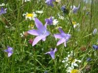 Flora im Lesachtal