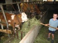 beim Tiere füttern
