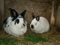 Pauline und Fritzi
