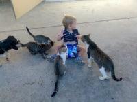 Thomas mit den Katzen