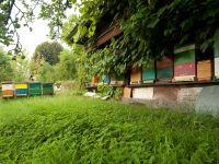 Das Bienenhaus