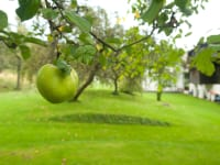 Garten mit Apfel