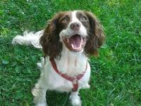 unser Hund Lilli