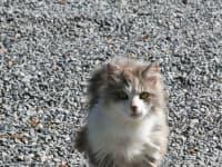 Katze Rosi