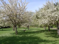 Frühlingsblütenmeer
