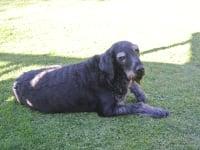 Unser Haushund KIMMI