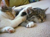 Hauskatzen