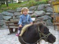 Pony.- Timon