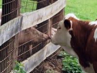 Unsere Viecher haben sich lieb