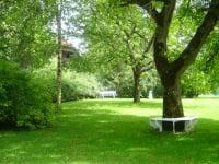 Unter alten Bäumen