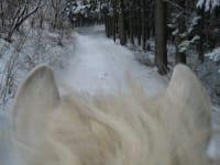 Pony- Winterausritt