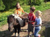 Pony Maxi wird verwöhnt