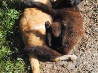 Hofkatzen