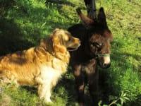 Bruno und Paloma