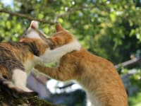 Unsere Katzen Misses und Sippi beim Spielen