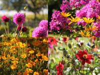 Blumenpracht am Zechnerhof