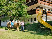 Gutzingerhof Haflingerpferde
