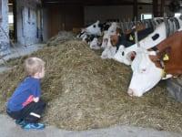 Emil beobachtet unsere Milchkühe ganz genau :)