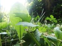 Schätze der Natur aus dem Blickfeld einer Ameise!