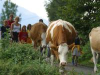 Gemeinsames Kühe holen am Gourmet Bauernhof Mentebauer