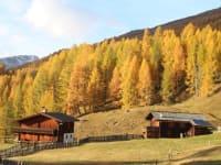 Im Herbst wird der Lärchenwald roz und gelb