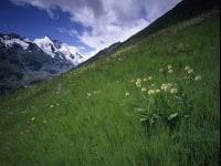 Glocknerwiesen