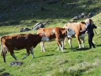 Zu Besuch bei den Kühen